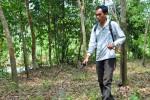 Les ouvriers agricoles traitent les plantations avec du paraquat. Cet herbicide hautement toxique interdit en Europe devrait être utilisé avec un équipement de protection adéquat. Ce qui est loin d'être le cas ici (Indonésie)