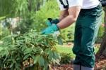 Le principal danger, avec le jardinier amateur, c'est l'erreur de dosage. Shutterstock