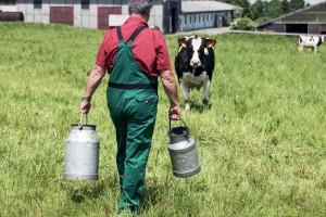 Le prix payé à l'éleveur a chuté de 18% entre 2009 et 2015. Pour Patrick Demont, la vente directe permet de contrer les marges des distributeurs. Jean-Luc Barmaverain Edler von Rabenstein/shutterstock.com