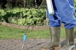 Arrachez ou brûlez les mauvaises herbes. En les traitant avec un herbicide, vous vous mettez hors la loi!  riopatuca/shutterstock.com