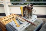 Lève-cadres, brosse de crin, enfumoir à soufflet font partie des accessoires de base pour inspecter l'intérieur de la ruche.