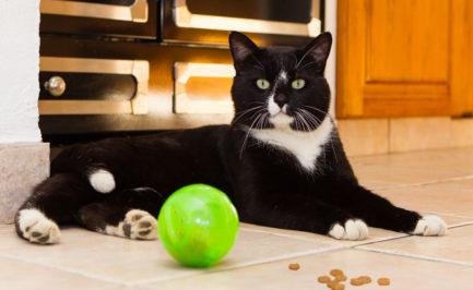 Croquettes pour chat: la gamelle qui rend malade