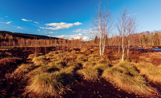 Environnement: laissons la tourbe à ses marais